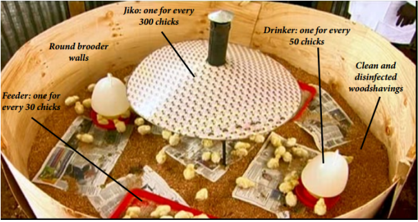 Diagram of Chick Brooder Setup