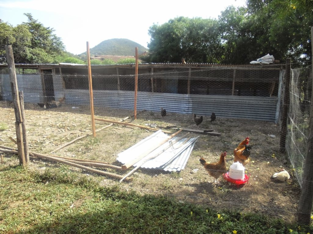 Spreading feeders and drinkers in the Kienyeji chicken run